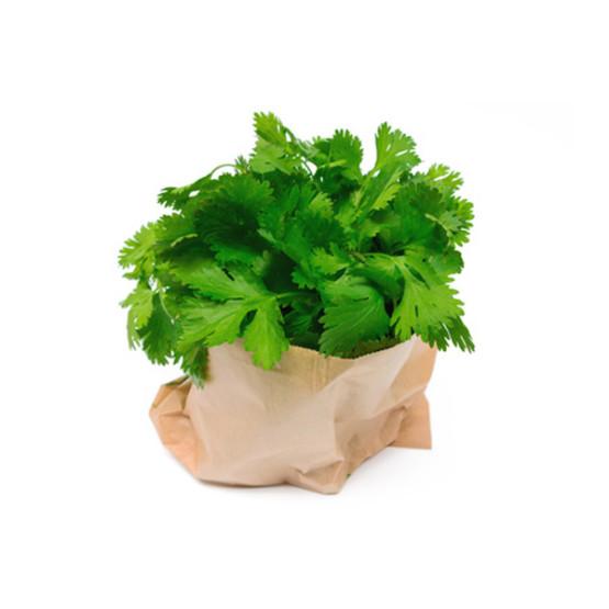 Kolendra-doniczka-hurtownia-owocowo-warzywna-trojmiasto